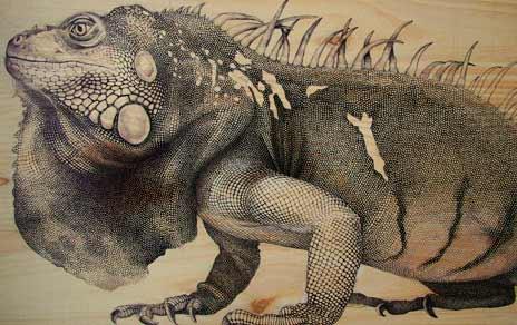 Martina Billi - Iguana, en el mncn