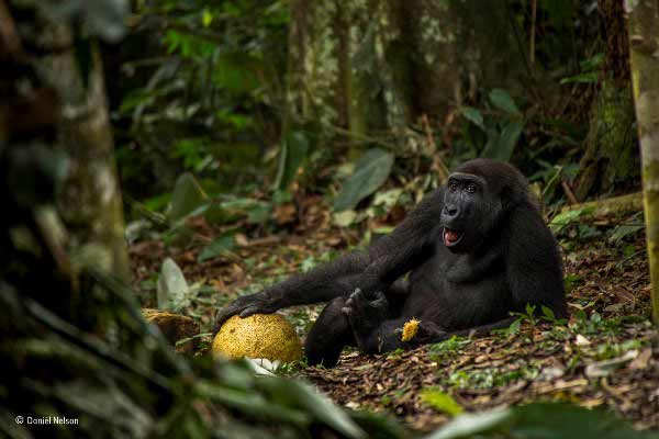 Wildlife Photographer of the Year 2017 - Daniel Nelson – La buena vida - categoría juvenil