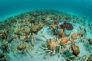 Wildlife Photographer of the Year 2017 - Justin-Gilligan - Foto ganadora en la categoría Invertebrados