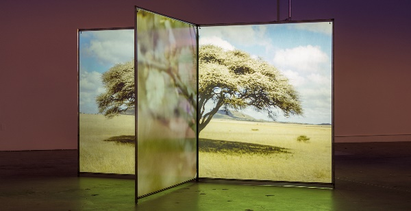 """Diana Thater: Un mundo a la fuga"" (A Runaway World), 2016–2017. Del 12 de julio al 21 de octubre de 2018 en el Museo Guggenheim Bilbao. Vídeoinstalación. Dimensiones variables. Vista de la instalación, The Mistake Room, Los Ángeles. © Diana Thater and The Mistake Room Inc. Foto: Fredrik Nilsen."