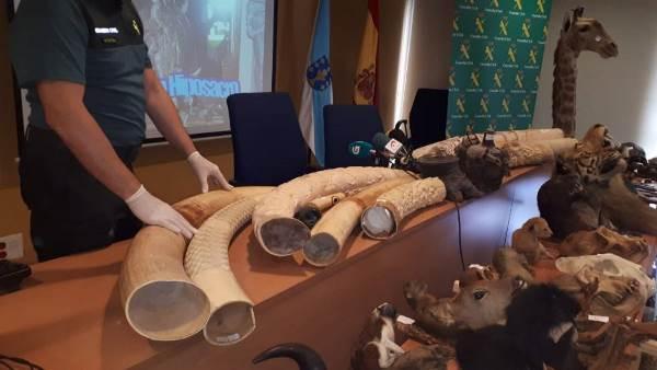 Algunos de los objetos incautados por la Guardia Civil en la Operación Hiposacro.